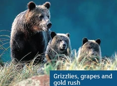 Our Canada Grizzlies, Grapes and Gold Rush